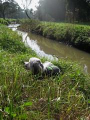 Dandenong Creek