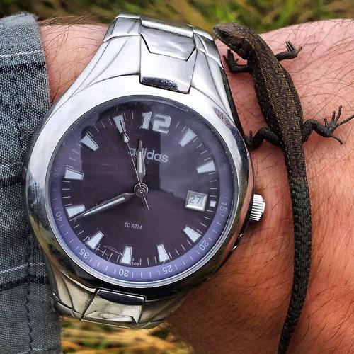 #Lizard o'clock