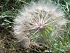 Snapshot 7 (7-23-2011 12-37 PM)