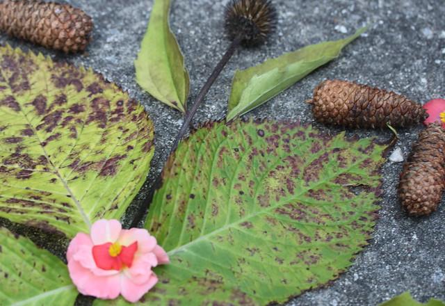 Four-leaf Mandala, closeup