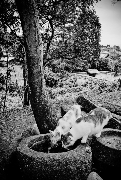 Double Drinking Felines, Kyoto
