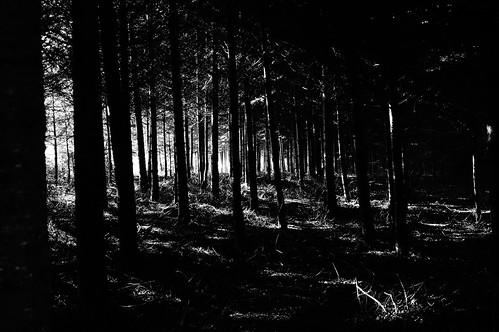 wood forest blackwhite nex nex6