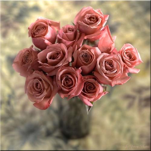 Satina Roses (square crop)
