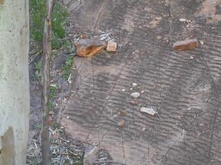 Fossil ripple marks, Germein Gorge, South Australia