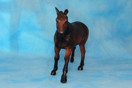 Walkaround of the Mojo Fun Sooty Bay Quarter Horse Stallion 15260195521_7ff2c1c3f5
