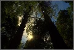 Shine between towering giants