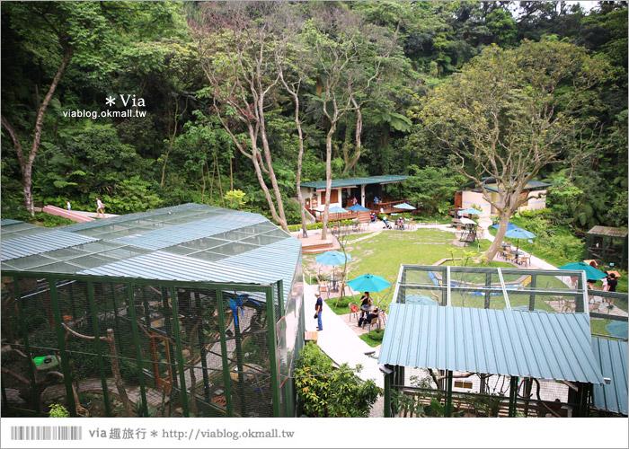 【新竹景點推薦】森林鳥花園~親子旅遊的好去處!在森林裡鳥兒與孩子們的樂園30