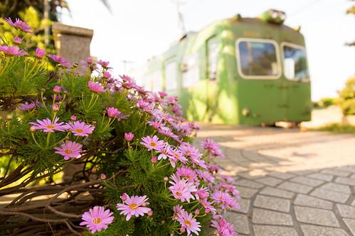 railroad flower station japan train railway 駅 千葉 鉄道 ローカル線 localline 銚子電鉄 無人駅