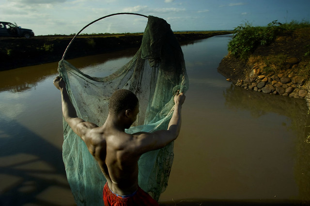 Lino Sioush harvests catfish and perch from canals that are part of the Baixo Limpopo Irrigation and Climate Resilience Project near Xai Xai Mozambique. Larger fish farming projects are planned.