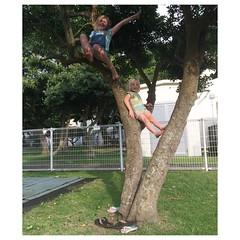 Tree-climbers.