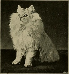 "Image from page 106 of ""Our domestic animals, their habits, intelligence and usefulness;"" (1907)"