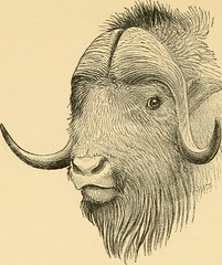 "Image from page 235 of ""Horn measurements and weights of the great game of the world: being a record for the use of sportsmen and naturalists"" (1892)"
