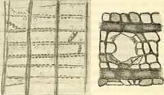 "Image from page 461 of ""Svenska vetenskapsakademien handlingar"" (1739)"
