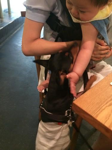 犬も赤ちゃんもOK@HOFF