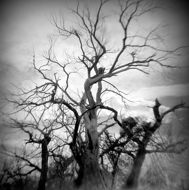 los muertos bailando