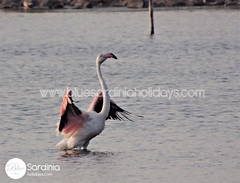 animal, water bird, swan, wing, fauna, beak, bird,