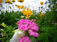 Versailles flower gardens