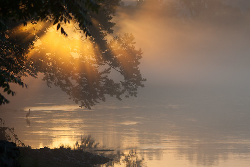 Ethereal Morning Mist.