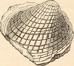 """Image from page 180 of """"Hardwicke's science-gossip : an illustrated medium of interchange and gossip for students and lovers of nature"""" (1884)"""