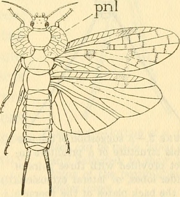 "Image from page 416 of ""Annual report of the Board of Regents of the Smithsonian Institution"" (1846)"