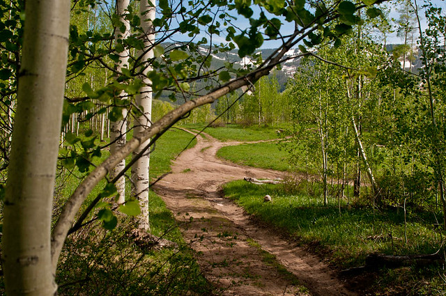 Historic logging roads in Colorado mountains