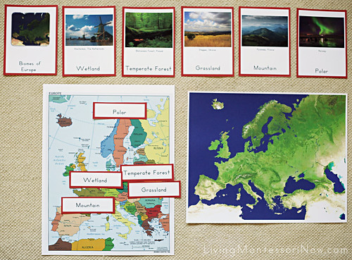 Biomes of Europe Activity