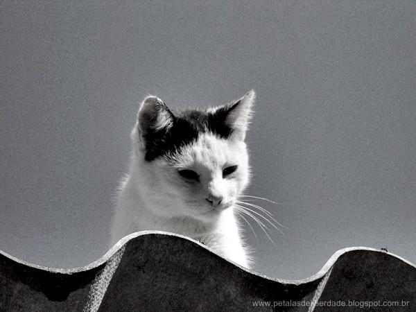 Gato, preto e branco, foto, telhado