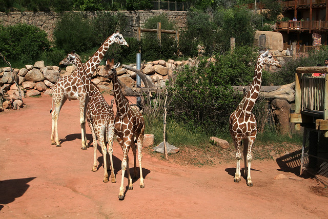 Revisiting: Cheyenne Mountain Zoo