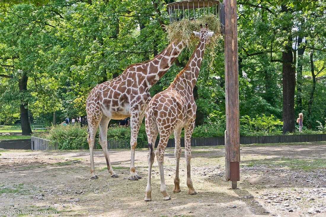 Берлин_зоопарк-35
