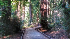 trail in the redwoods, Muir Woods, California