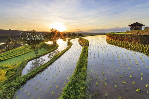 bali house sunrise reflections indonesia landscape photography tour village rice hut guide ricefield jatiluwih baliphotography balitravelphotography baliphotographytour baliphotographyguide