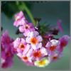 Little Flower Little Critter