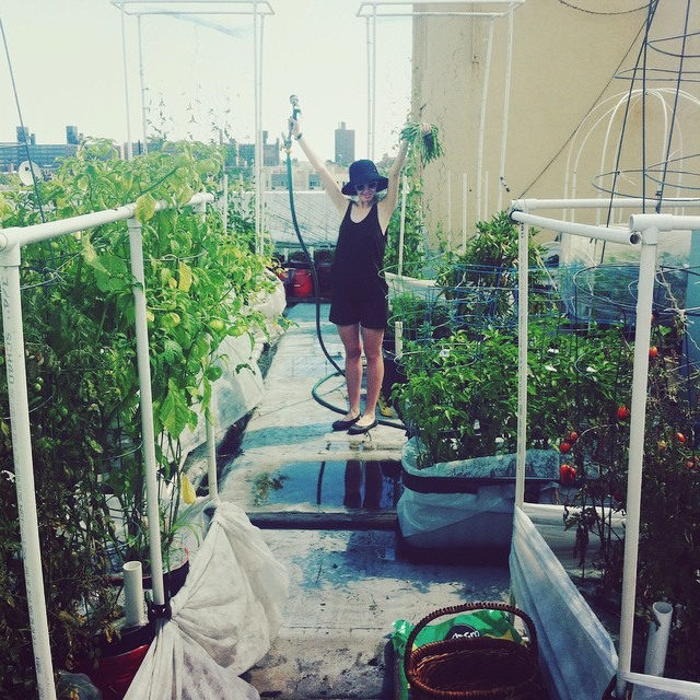 Sunday morning in the garden.  Had a lot of catching up to do.  It's the calm before the storm, some big harvests coming this week!  And high 5 to wearing rompers!  #vegetablegarden #rooftop #NYC #Brooklyn #vegetables #healthyeating #garden #gardening #ur