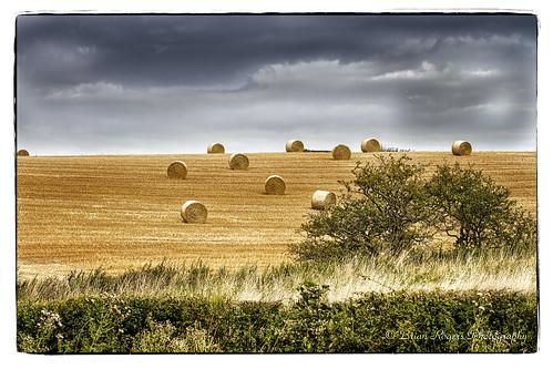 storm durham hay bayles