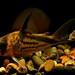 Corydora melini by Mago62