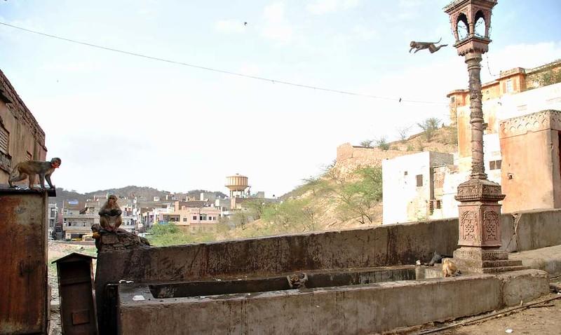 419 Jaipur (32)