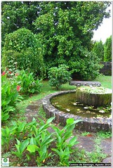 botanical garden, shrub, flower, garden, yard, landscaping, lawn, pond,