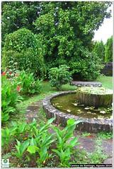 woodland(0.0), fish pond(0.0), walkway(0.0), botanical garden(1.0), shrub(1.0), flower(1.0), garden(1.0), yard(1.0), landscaping(1.0), lawn(1.0), pond(1.0),