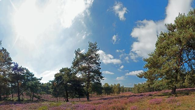 20140912 003 Wellerlooi Maasduinen Panorama 04