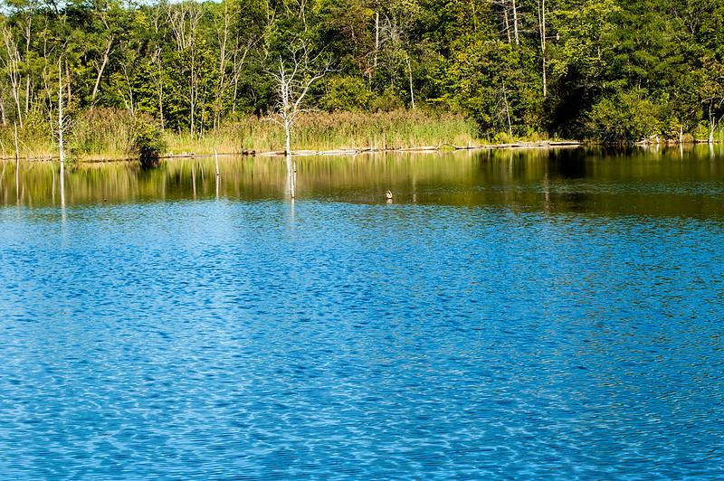 Chinook Fish & Wildlife Area