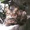 #kucing #ucing #cat #chat #katze #ねこ #고양이 #貓 #felis #silvestris #catus #gato #γάτα #кошка #кот #mèo #miau #gatto #kitty #kat #katt #kissa #meow #macska #قط