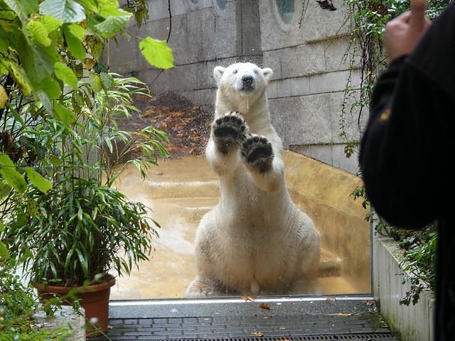 Luka, Zoo Wuppertal