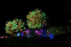 2016 National LDS Temple Christmas Lighting _23