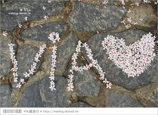 【桐花2014】南投油桐花景點~牛耳石雕藝術渡假村賞桐趣33