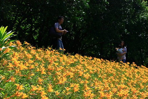 2014 05 18 新北市.三芝.牧蜂農場.金針花
