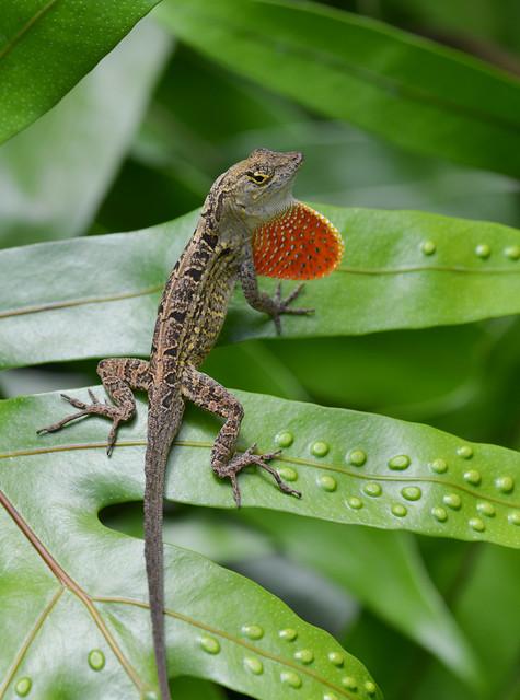 Lizard | Flickr - Photo Sharing!