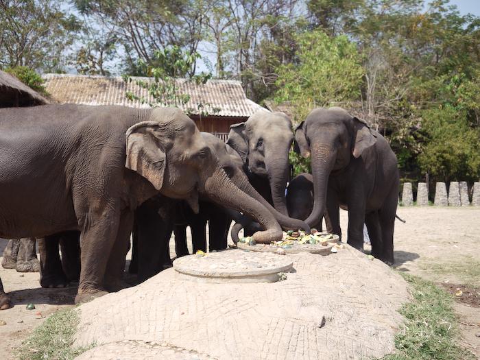Elephant Nature Park Chiang Mai-27