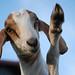 High Five by 2-Dog-Farm