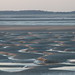 Small photo of Baie de Somme