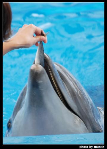 海豚是因為飢餓,不得不做出的制約表演。圖片來源:Munch